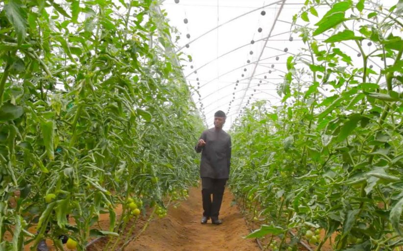 Onida's New Greenhouses Project In Taraba State Nigeria